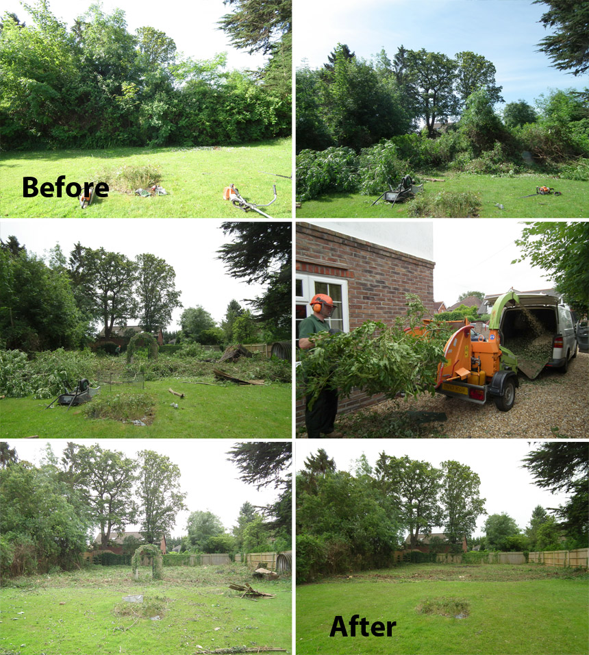 Before and after garden tree removal